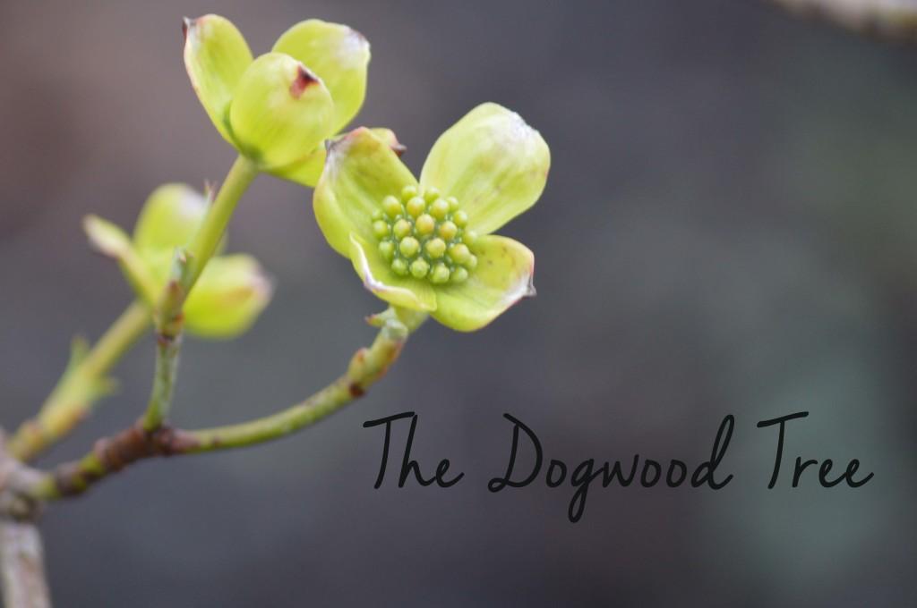 dogwoodfeatureimage9